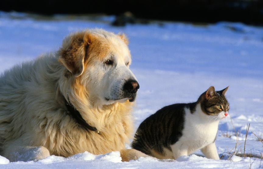 « Bien protéger vos animaux du froid »